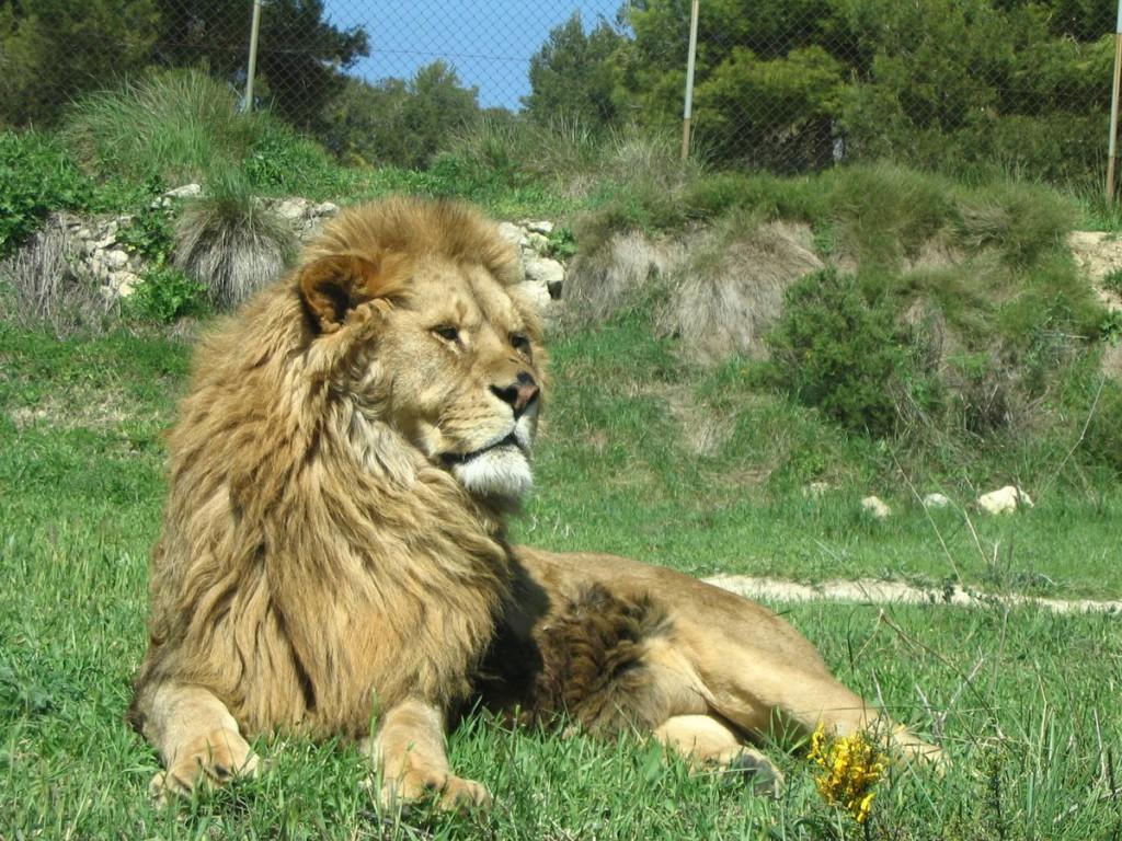 Safari Aitana dyrepark