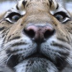 Dyreparkene Safari i Ronda og Malaga provinsen