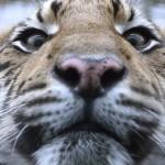 Dyreparkene Safari i Malaga