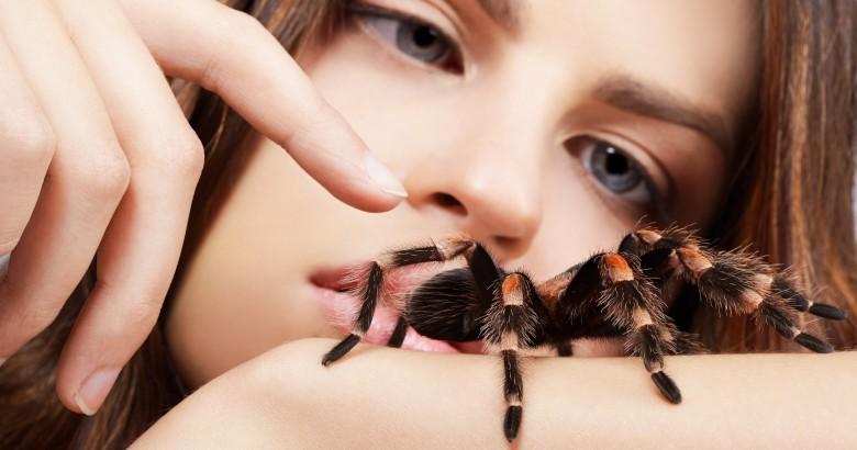 Edderkopper Spania